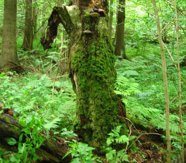 Как передвигаться в лесу?. 13174.jpeg