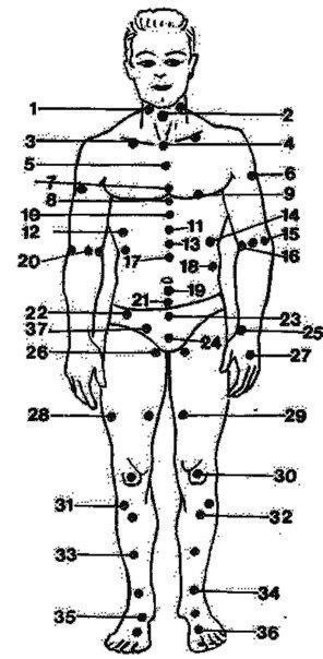 Куда и как бить противника: о болевых точках тела. Видео. Уязвимые и болевые точки тела 1