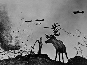"""История фотографии """"Олень Яша"""" (Заполярье, 1941 г.)"""