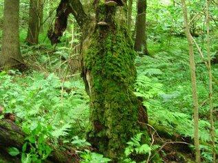Как передвигаться в лесу?